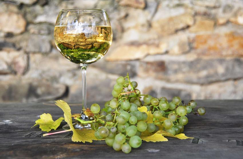 Wino z białego winogrona podane w lampce.