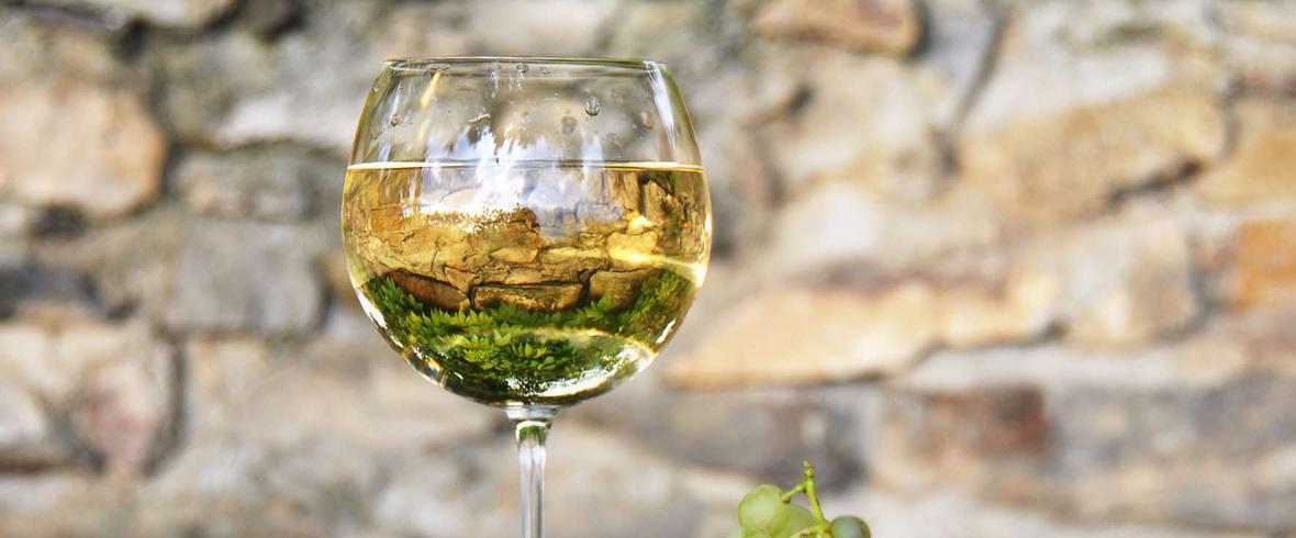 wino z białego winogrona