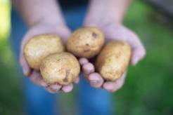 Ziemniaki po cabańsku
